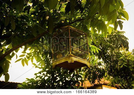 Bird cage hang on tree branch photo taken in Jakarta Indonesia java