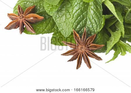 cinnamon star anise mint licorice close up on the white