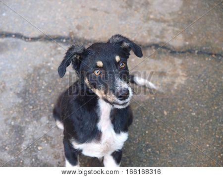 stray hungry puppy. The black stray dog