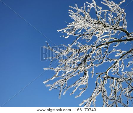 frozen tree branch with winter white snow on blue texture