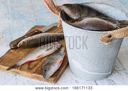 Small river fish, perch and roach, on the cutting board and in metal bucket on a light wooden table.