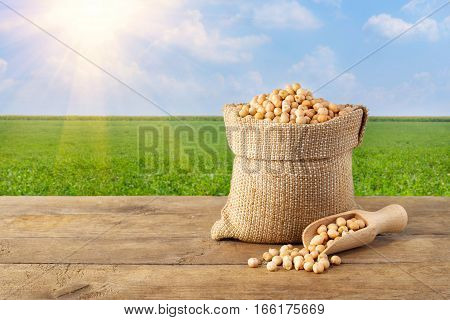 chickpea in sack. Chickpea in bag on table on chickpea field background. Agriculture and harvest concept. Photo with copy space area for a text. Green chickpea field, blue sky, sunshine