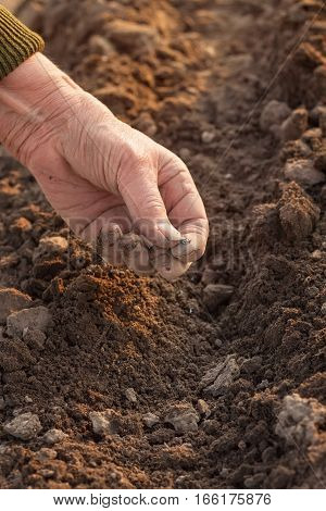 Closeup of hand of an elderly woman throwing seeds in the ground. Planting seeds in spring. Future concept. Farmer's hand planting seed in soil