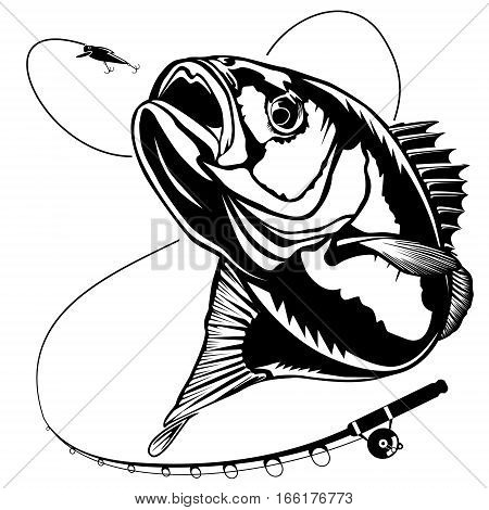Bass fish logo. Perch fishing vector illustration.