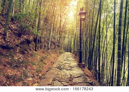 Wet stone path in the bamboo forest in Huangshan National park. China.