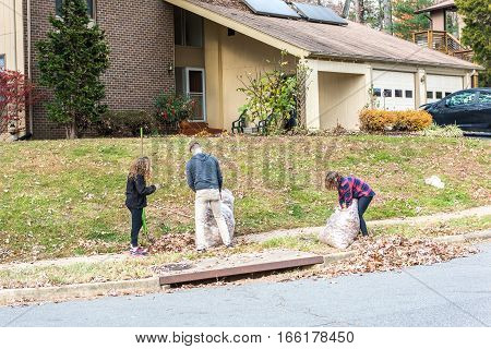 Fairfax, USA - November 24, 2016: Three young people gathering fallen leaves in bags during autumn in neighborhood