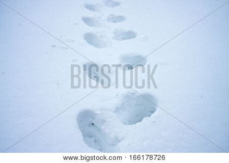 Footsteps in the deep snow on a sunny day