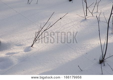 Bush branches and snow in winter forest close up