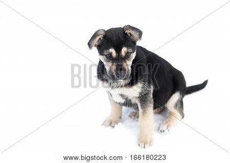 Cute stray puppy sitting on a white background