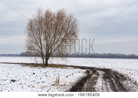 Winter landscape with dirty road between agricultural fields and lonely tree on the roadside central Ukraine