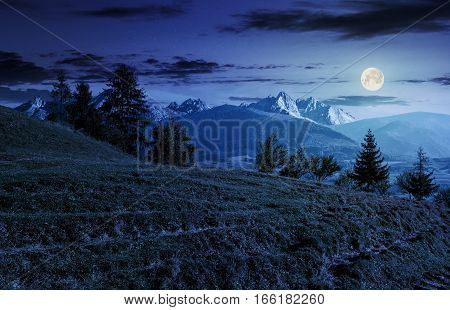 Spruce Forest On Grassy Hillside In Tatras At Night