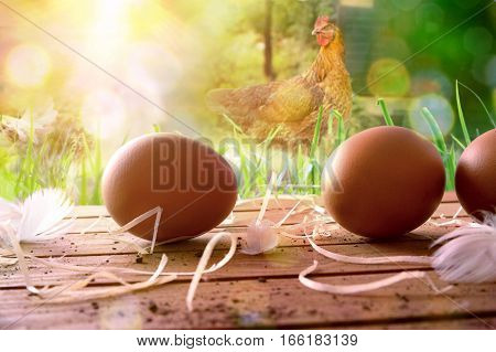 Freshly Picked Eggs On Wooden Table And Field With Chickens