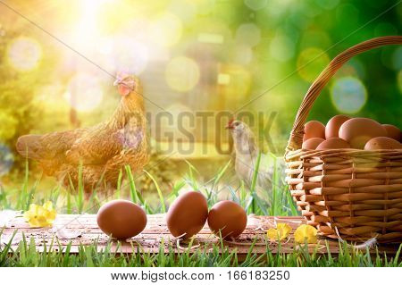 Freshly Picked Eggs In Wicker Basket And Field With Chickens
