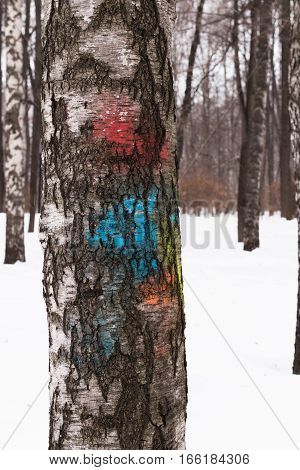 Texture of birch bark painted in different colors. Old tree trunk with a broken bark. Texture closeup of tree bark. Background of bark tree.