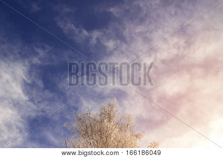 Winter Sky, Snow-covered Tree Branches On A Background Of Clouds