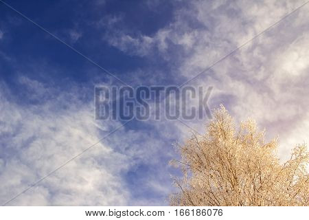 Winter Blue Sky, Snow-covered Tree Branches On A Background Of Clouds
