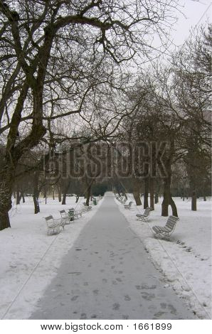 Prague Park In Winter