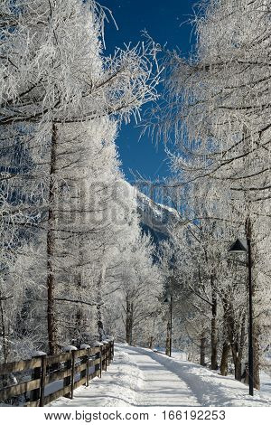 the fine winter mountains landscape. Sunny day. Winter decline. The bright colors. Winter forest. forest river. Branches in hoarfrost.