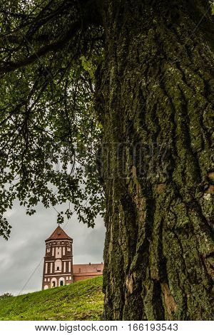 Mir Belarus - September 05 2016: Castle tower in town Mir Belarus and the old tree with a rough bark texture in the foreground