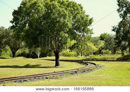 A train track around a tree in Florida