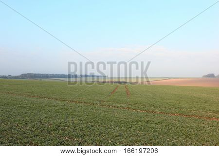English landscape with frosted winter wheat fields in the patchwork countryside of the Yorkshire wolds.