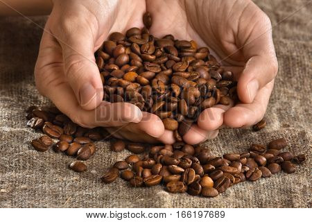 woman hands holding handful of roasted coffee beans