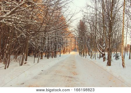 Beautiful winter alley. Park trees covered with snow. Landscape Winter alley