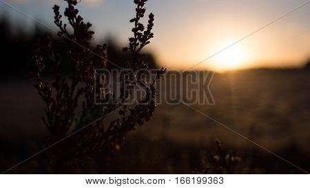Plant with a beautiful blurry sunrise background