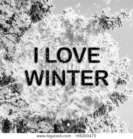 I love winter words on winter background