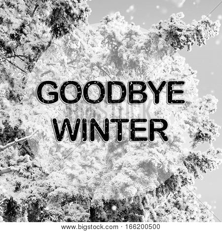 Goodbye winter words on winter background in black and white