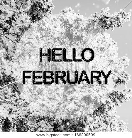 Hello February words on winter background in black and white