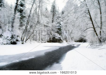 Frozen river Hornad in snowy forest at Slovak paradise.