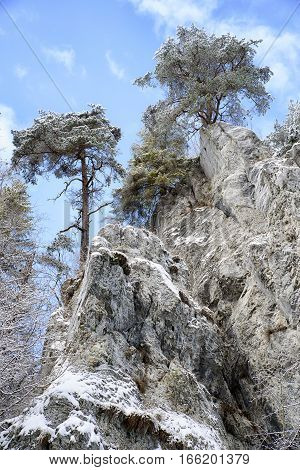 Rock formations with trees on top in winter Slovak paradise