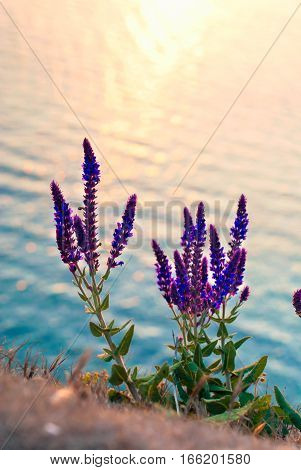 Bright colored wild flowers on the background of the sea in the sunset light. Bright greeting card with flowers.