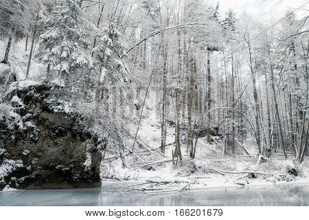 Winter forest with snowy tress in Slovak paradise