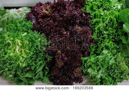 Fresh lettuce salads lollo rosso red and green and escarole endive or frisee salad on a counter for sale in a grocery store. Variety of fresh lettuce salads. Horizontal.