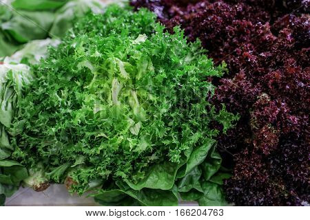 Fresh lettuce salad lollo rosso red and escarole endive or frisee salad green on a counter for sale in a grocery store. Variety of two fresh lettuce salads. Horizontal.