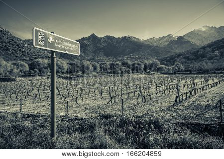 Route Des Vins Road Sign By Vineyard In Corsica