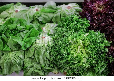 Fresh lettuce salads lollo rosso red, escarole endive or frisee green salad and french lettuce on a counter for sale in a grocery store. Variety of three fresh lettuce salads. Horizontal.