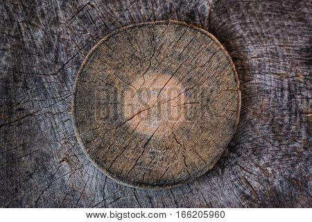 Tree trunk cross section with tree rings. Background texture of natural wood.
