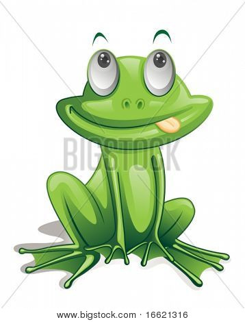 Illustration of green frog on white
