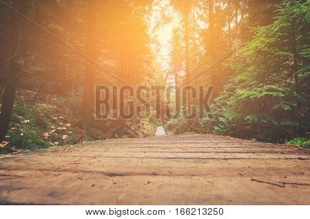 hiking path in forest landscape - walkway in nature