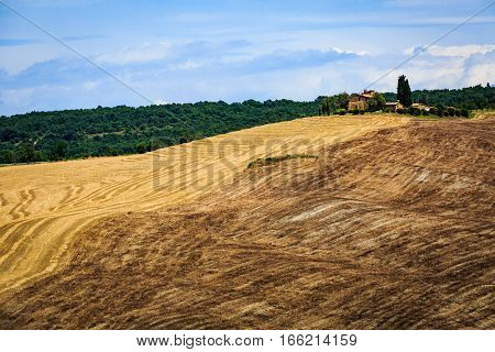 Fields In Tuscan Region Val D Orcia, Italy