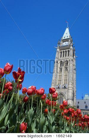 Parliament Hill And Tulip Festival