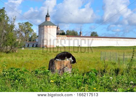 Fortress tower of Kirillo-Belozersky monastery by day near City Kirillov Vologda region Russia. In the foreground a cat on a tree stump.