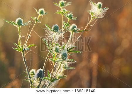 Beautiful Natural Background With Dew On Grass