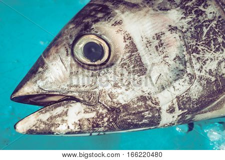 Close Up of tuna head at fishmarket, Blue background