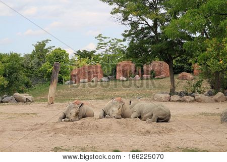 The group of hippo  in the field