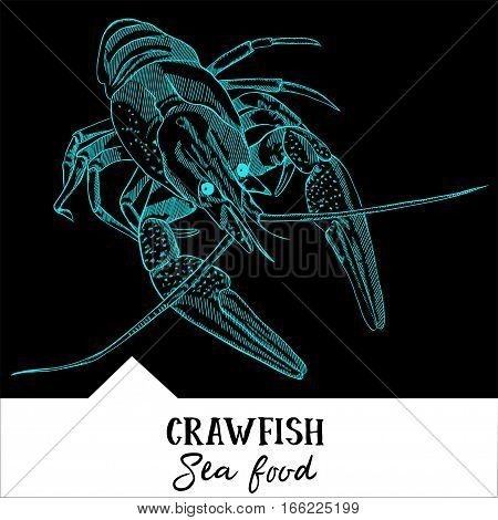 Hand drawn, vector illustration, design for a seafood restaurant menu. The picture shows the crawfish on a black background.