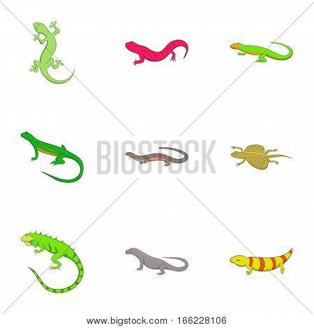 Amphibian reptile species icons set. Cartoon illustration of 9 amphibian reptile species vector icons for web